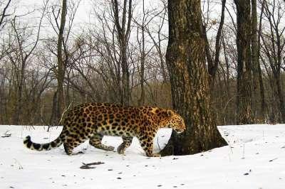 http://ecoportal.su/images/news/101318.jpg