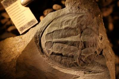 Палеонтолог нашел ни на что не похожее существо