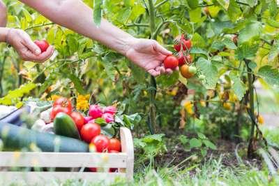 В городах предложили разбить общественные огороды