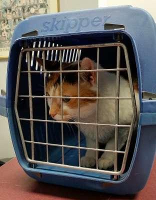 Преимущества ветеринарных услуг на дому. Пресс-релиз