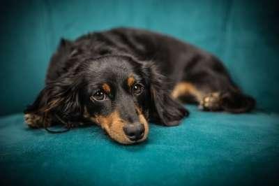Россельхознадзор упрощает правила ввоза домашних животных для граждан, возвращающихся в Россию из других стран по причине неблагоприятной эпидемиологической ситуации