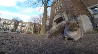 Белка стащила GoPro и полезла с ним на дерево. Видео