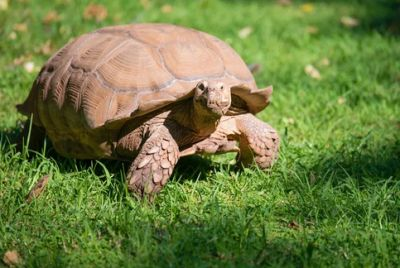 Топ-5 самых медленных животных планеты