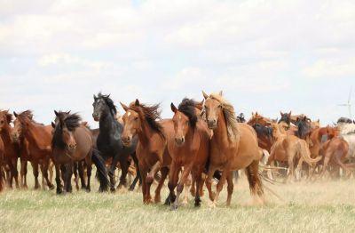 Окончательно установлено происхождение домашних лошадей