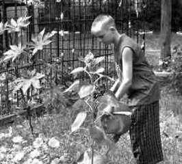 Юный натуралист. Фото с сайта amurpravda.ru