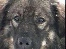 За убийство собаки жетеля Ленинградской области осудили на 1,5 года колонии. Фото: Вести.Ru