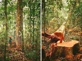 Правительство Бразилии признано самым злостным вырубщиком лесов Амазонки