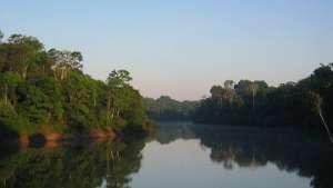 Засухи мешают джунглям Амазонии поглощать углекислый газ