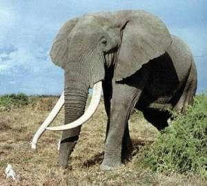 Слон - удивительное и интересное животное. Фото: www.zoo-news.ru