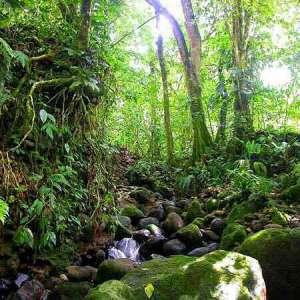 Тропический лес фото с сайта http www