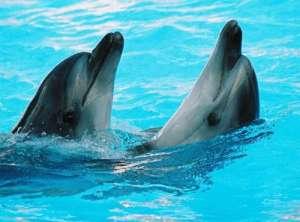 Дельфины. Фото из открытых источников сети Интернет