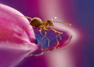 Насекомые в необычном свете. Фото: http://animalpicture.ru