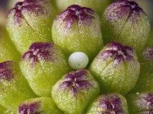 Крошечные миры. Фото: http://greenword.ru