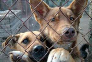 Бездомные животные фото http podrobnosti ua