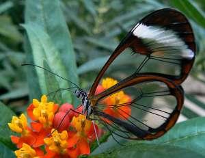 Сексуальные бабочки