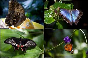 Бабочковый рай. Фото: http://bigpicture.ru