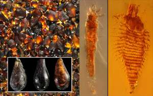 Картинка: Слева: россыпь янтаря, из которой были отобраны фрагменты с сохранившимися внутри насекомыми. Слева внизу: три фрагмента с находками. В центре: клещ Triasacarus fedelei. Справа: клещ Ampezzoa triassica.
