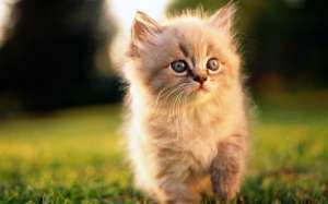 фото милых котят и щенят