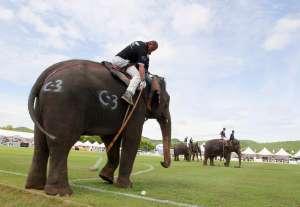 Поло на слонах. Фото: http://mn.ru