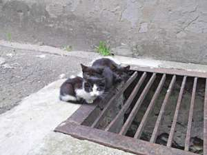 Рижские бездомные коты. Фото DELFI