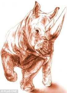 Окаменелость, найденная в Турции, как думают исследователи, является черепом древнего большого двурогого носорога, распространенного в Восточном Средиземноморье. Фото с сайта plosone.org