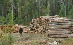 Природоохранные организации Швеции и России выступили с совместным заявлением.
