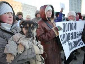 В Архангельске прошёл митинг в защиту бездомных животных. Фото: http://dvinainform.ru