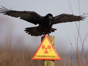 Радиоактивные отходы. Фото: Reuters