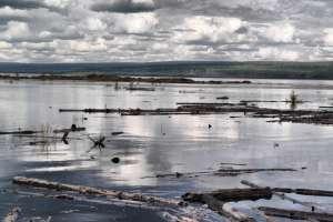 Мертвое море Богучанской ГЭС. Фото с сайта www.bellona.ru