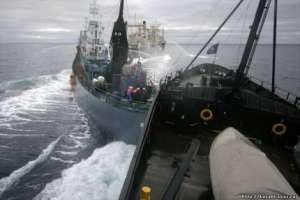 Суда защитников китов столкнулись с японскими китобоями в Антарктике. Фото: http://u-prichala.ru