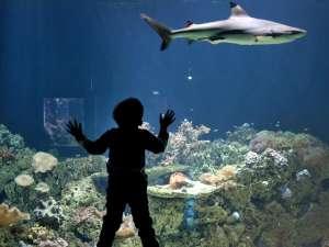 Акулы - очень чувствительные животные. В неволе за ними требуется строгий контроль. Для их содержания необходимы специальные безопасные условия. Фото: http://www.globallookpress.com/