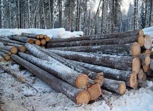 Незаконные рубки леса. Фото: http://lesvesti.ru