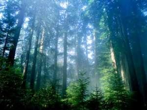 Международный день леса. Фото: http://woodruss.ru