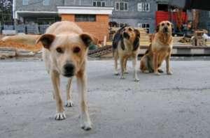Бездомные собаки. Фото: http://veved.ru