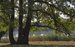 Минприроды России выступило против вывода участков природного парка «Волго-Ахтубинская пойма» из категории «особо охраняемой природной территории». Фото: http://lesvesti.ru