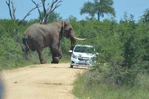Слон и туристы на авто. Фото: http://life.ru