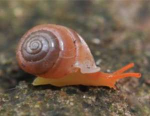 Perrottetia dermapyrrhosa, один из обнаруженных видов. Фото: Panha / CC-BY 3.0