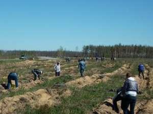 В Рязанской области нефтяники посадили четыре гектара нового леса. Фото: http://greenpressa.ru/