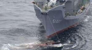 Японские китобои. Фото: http://www.otvprim.ru
