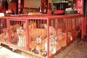 Собаки в Корее. Фото: http://3korea.ru/