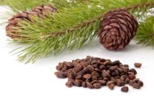 Кедровые орехи. Фото: http://narmed.ru