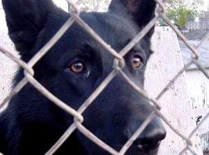 Жители Туапсе жалуются на догхантера, убившего при помощи отравленного фарша более 20 собак. Фото: ЮГА.ру