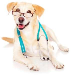 Собака — лучший друг врача. Фото: Наука и Жизнь