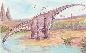 Апатозавр на водопое (иллюстрация Wikimedia Commons).