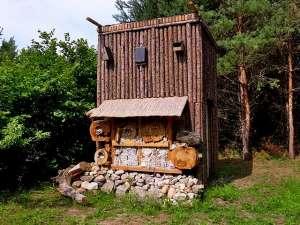 В Крыму собираются построить гостиницу для насекомых, в которой будут соседствовать муравьи, моль, жуки, мухи и другие представители местных степных насекомых. Фото: wikimedia.org