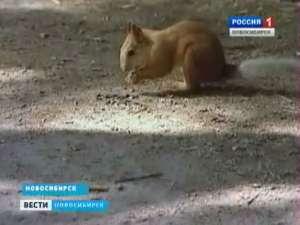 Фото: Вести.Ru