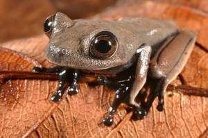 Самые запоминающиеся виды, обнаруженные в 2013 году