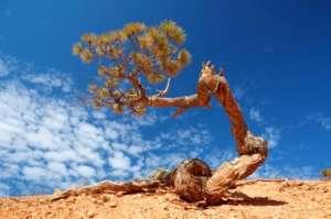 Хвойные деревья изо всех сил стараются создать как можно больше облаков. (Фото Ryan Benyi Photography.)