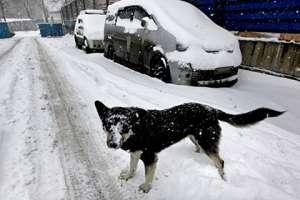 Госдуме предложили ввести запрет на убийство бездомных животных. Фото с сайта Lenta.Ru