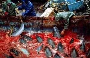 Забой дельфинов в Японии. Фото: http://lamcdn.net/